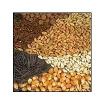 organic-seeds-1582102