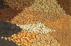 seeds-1582108